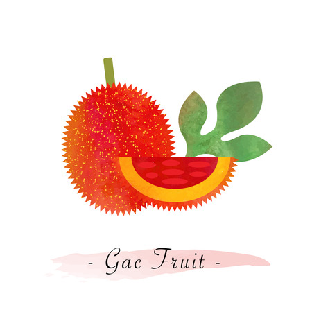 girlish: Colorful watercolor texture vector healthy gac fruit Illustration