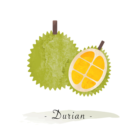 Colorful watercolor texture vector healthy fruit durian