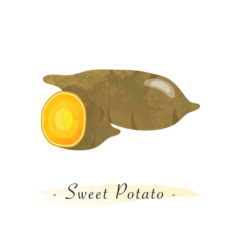 Colorful watercolor texture vector healthy vegetable sweet potato