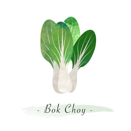 Colorful watercolor texture vector healthy vegetable bok choy Illustration