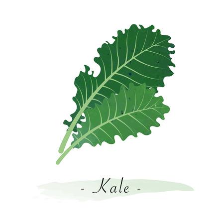 カラフルな水彩テクスチャ ベクトル健康野菜ケール
