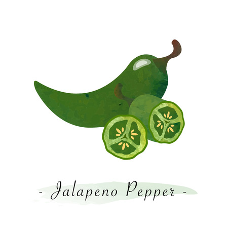 Colorful watercolor texture vector healthy vegetable green jalapeno pepper