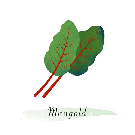Kleurrijke aquarel textuur vector gezonde plantaardige mangold Swiss Chard leaf