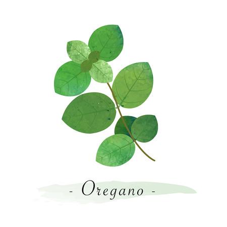 다채로운 수채화 텍스처 벡터 건강한 야채 오레가노