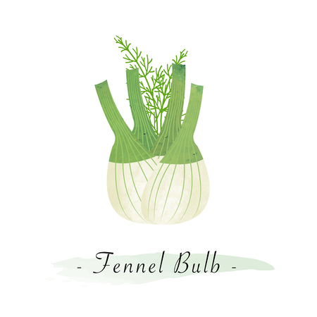 Colorful watercolor texture vector healthy vegetable fennel bulb