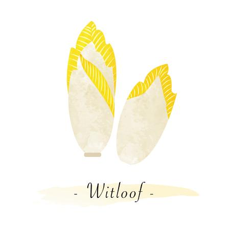 Kleurrijke aquarel textuur vector gezonde groente witloof witloof