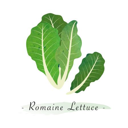 Colorido textura acuarela vector saludable vegetales lechuga romana Ilustración de vector