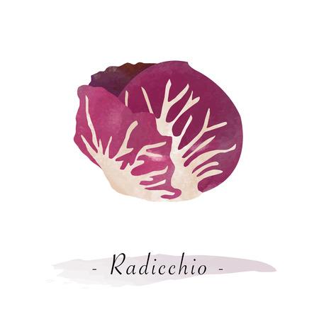 Colorful watercolor texture vector healthy vegetable radicchio