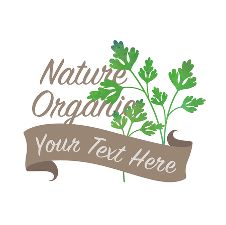 Colorful watercolor texture vector nature organic vegetable banner parsley Çizim