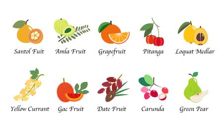 Organic nature health fruit isolated vector collection set  イラスト・ベクター素材