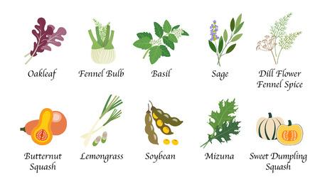 Organische Natur Gesundheit Gemüse Essen Gewürz isoliert Vektor Sammlung gesetzt
