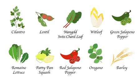 Organische natuur gezondheid groente voedsel kruiden geïsoleerde vector collectie set