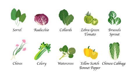 Organic nature health vegetable food spice isolated vector collection set Stock Vector - 82756682