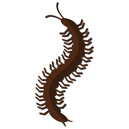 Nursery nature insect vector centipede