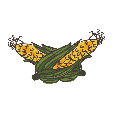 Hand drawn colorful nature vegetable in retro style corn cob