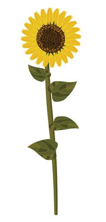 Botanic garden nature sunflower