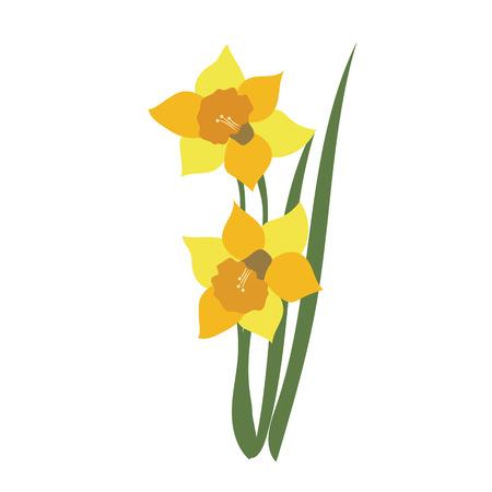 Naturblumennarzisse, vektorbotanische Gartenblumenblattpflanze.