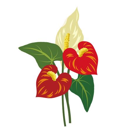 Nature flower red anthurium flamingo flower, vector botanic garden floral leaf plant. Illustration