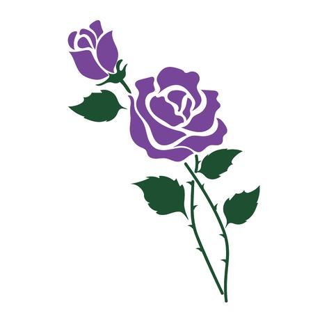 Nature flower purple rose, vector botanic garden floral leaf plant.