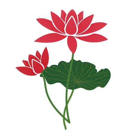Naturaleza flor loto rosa, planta de hoja floral de jardín botánico de vector.