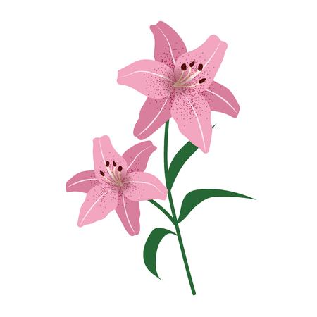 Nature flower pink lily, vector botanic garden floral leaf plant.
