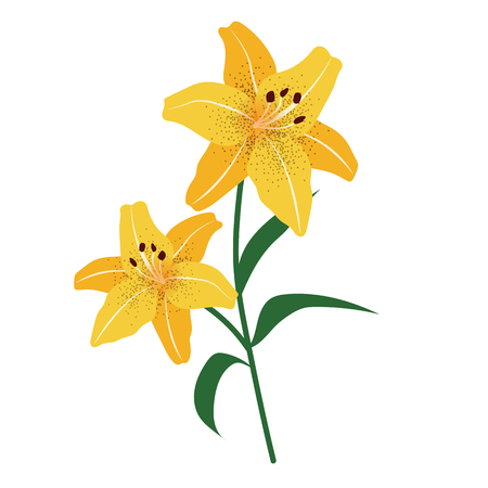Nature flower yellow tiger lily, vector botanic garden floral leaf plant.