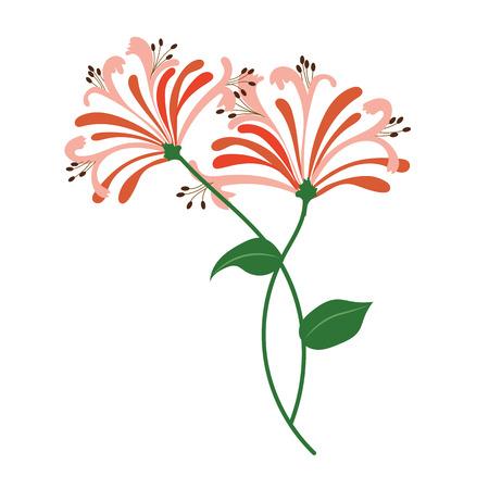 Nature flower orange honeysuckle, vector botanic garden floral leaf plant. Vettoriali