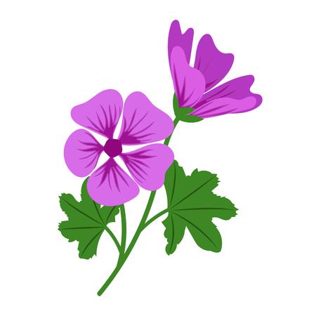 Nature flower violet mallow, vector botanic garden floral leaf plant.