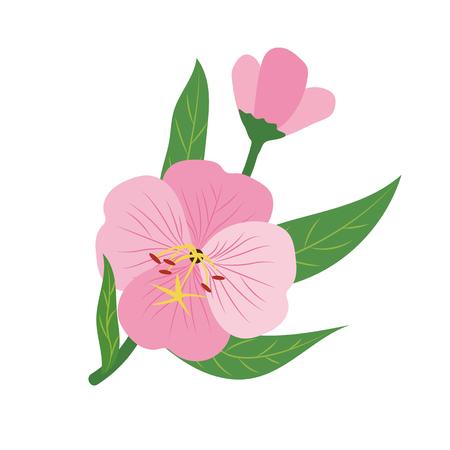 Nature fleur rose d'onagre, plante à feuilles florales de jardin botanique de vecteur.