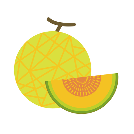 Healthy organic net melon, colorful tropical nature fresh fruit objects.