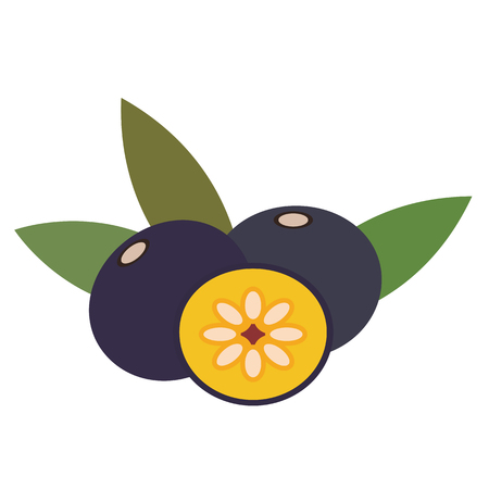 Healthy organic amazon acai berry, colorful tropical nature fresh fruit objects.