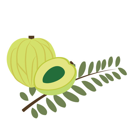 Healthy organic Amla fruit, colorful tropical nature fresh fruit objects.
