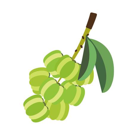 Gesunde organische Sternstachelbeere, frische Fruchtgegenstände der bunten tropischen Natur.