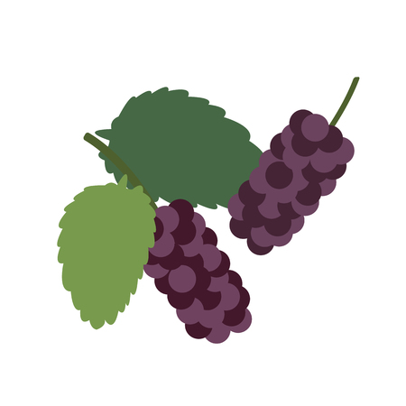Healthy organic black mulberry, colorful tropical nature fresh fruit objects. Vector Illustratie