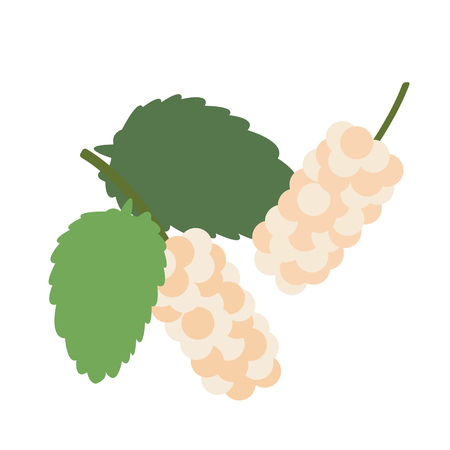 Healthy organic white mulberry, colorful tropical nature fresh fruit objects. Çizim