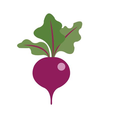 Nature organic vegetable Beet, healthy vector colorful food vegetable spice ingredient.