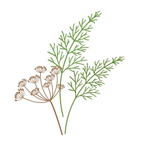 Natur Bio-Gemüse Dillblume Fenchelgewürz, gesunde Vektor-bunte Lebensmittelgemüse-Gewürzzutat.