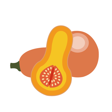 Nature organic vegetable Butternut squash, healthy vector colorful food vegetable spice ingredient.
