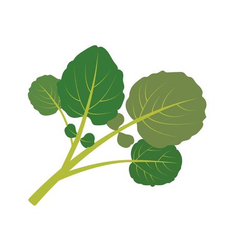 Nature organic vegetable Watercress, healthy vector colorful food vegetable spice ingredient.