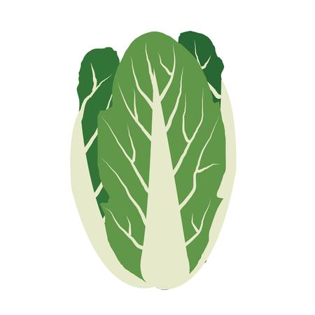 Nature organic vegetable Chinese cabbage, healthy vector colorful food vegetable spice ingredient. Vektoros illusztráció