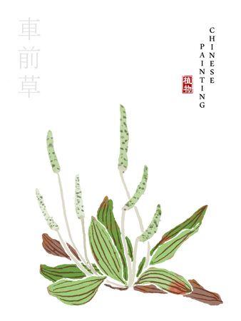 Aquarell chinesische Tinte malen Kunst Illustration Natur Pflanze aus The Book of Songs Dooryard Weed. Übersetzung für das chinesische Wort: Plant and Dooryard Weed Vektorgrafik