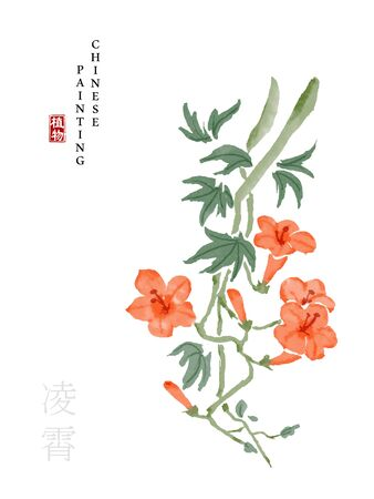 Watercolor Chinese ink paint art illustration nature plant from The Book of Songs Chinese trumpet creeper. Translation for the Chinese word : Plant and Chinese trumpet creeper