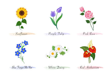 Watercolor botanic garden nature plant flower sunflower tulip rose forget me not daisy red anthurium
