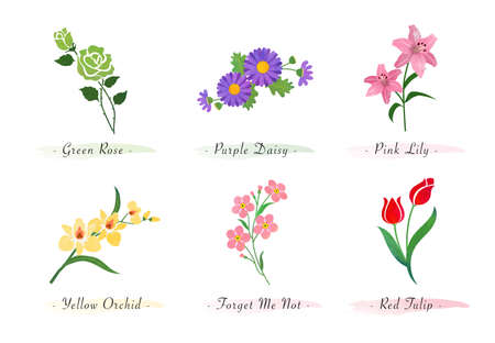 Watercolor botanic garden nature plant flower rose daisy lily orchid forget me not tulip 向量圖像