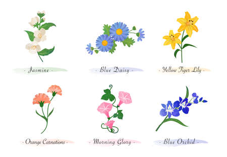 Watercolor botanic garden nature plant flower jasmine daisy tiger lily carnation morning glory orchid