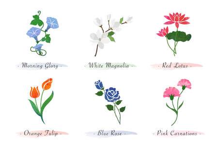 Watercolor botanic garden nature plant flower morning glory magnolia lotus tulip rose carnation 矢量图像
