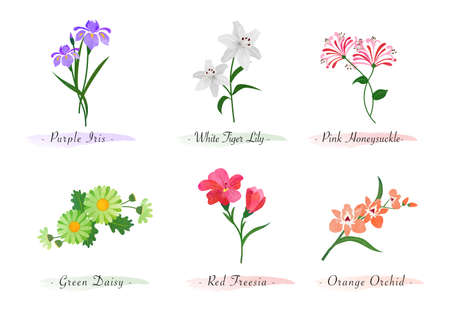 Watercolor botanic garden nature plant flower iris tiger lily honeysuckle daisy red freesia orchid 向量圖像