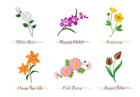 Watercolor botanic garden nature plant flower rose orchid buttercup tiger lily daisy tulip
