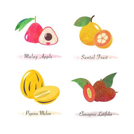 Organic nature healthy food fruit malay apple santol fruit pepino melon elaeagnus latifolia Vettoriali