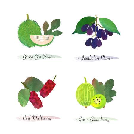 Organic nature healthy food fruit green gar fruit jambolan plum red mulberry green gooseberry